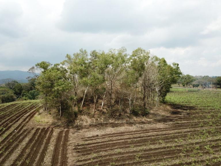 Cerrito 1, the highest mound on site
